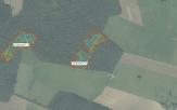 Miškų ūkio paskirties žemės sklypo pardavimo aukcionas Raseinių r. sav., Ariogalos sen., Juteikių k. (kadastro Nr. 7208/0003:37)