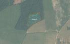 Miškų ūkio paskirties žemės sklypo pardavimo aukcionas Raseinių r. sav., Betygalos sen., Gedvydų k. (kadastro Nr. 7203/0004:113)