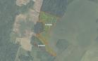Miškų ūkio paskirties žemės sklypo pardavimo aukcionas Kelmės r. sav., Tytuvėnų apylinkių sen., Žaliknio k. (kadastro Nr. 5442/0003:62)