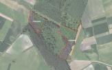 Miškų ūkio paskirties žemės sklypo pardavimo aukcionas Radviliškio r. sav., Baisogalos sen., Palonų k. (kadastro Nr. 7142/0002:213)
