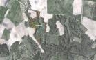 Miškų ūkio paskirties žemės sklypo pardavimo aukcionas Kelmės r. sav., Liolių sen., Flerijoniškės k. (kadastro Nr. 5412/0002:32)