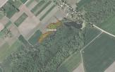 Miškų ūkio paskirties žemės sklypo pardavimo aukcionas Joniškio r. sav., Žagarės sen., Bandorių k. (kadastro Nr. 4710/0004:206)
