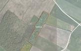 Miškų ūkio paskirties žemės sklypo pardavimo aukcionas Pakruojo r. sav., Lygumų sen., Tylių k. (kadastro Nr. 6505/0001:139)