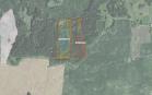 Miškų ūkio paskirties žemės sklypo pardavimo aukcionas Pasvalio r. sav., Vaškų sen., Norelių k. (kadastro Nr. 6773/0004:211)