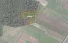 Miškų ūkio paskirties žemės sklypo pardavimo aukcionas Širvintų r. sav., Gelvonų sen., Mikalajūnų k. (kadastro Nr. 8915/0004:305)