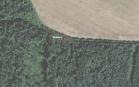 Miškų ūkio paskirties žemės sklypo pardavimo aukcionas Pakruojo r. sav., Pašvitinio sen., Vaiškonių k. (kadastro Nr. 6508/0003:131)